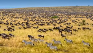 best place to visit in Africa (serengeti)