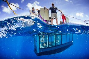 GreatWhite Shark Cage Diving in south africa